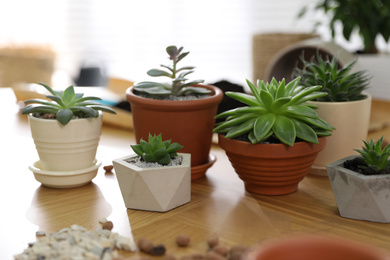 Beautiful potted plants on wooden table at home. Engaging hobby