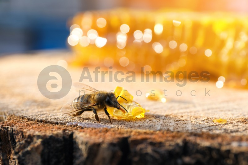 Small piece of fresh honeycomb with bee on wood stump against blurred background, closeup