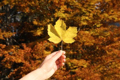 Woman holding beautiful leaf outdoors on autumn day, closeup