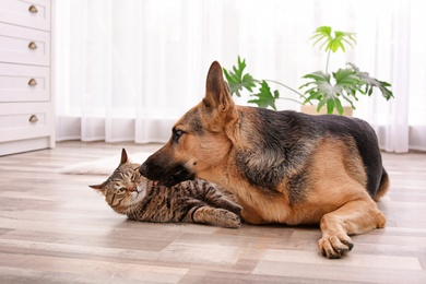 Adorable cat and dog resting together at home. Animal friendship