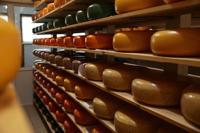 Fresh cheese heads on rack in factory warehouse