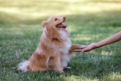 Young woman with her cute dog in park, closeup