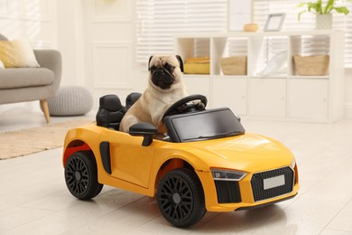 Adorable pug dog in toy car indoors