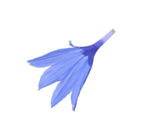 Petals of blue cornflower isolated on white