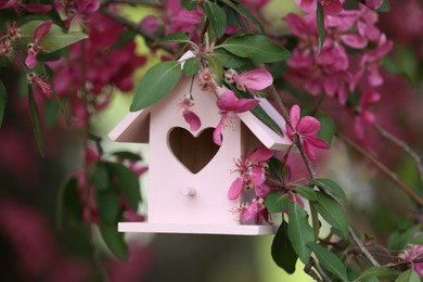 Wooden bird house on blossoming tree outdoors