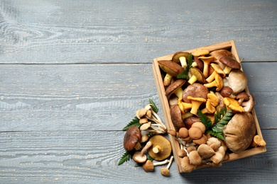 Flat lay composition with different mushrooms on grey wooden background, space for text