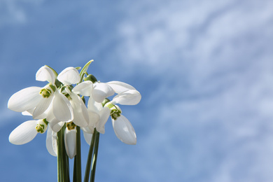 Bouquet of beautiful snowdrops against sky, space for text. Spring flowers