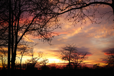 Silhouettes of trees outdoors in evening. Beautiful twilight sky