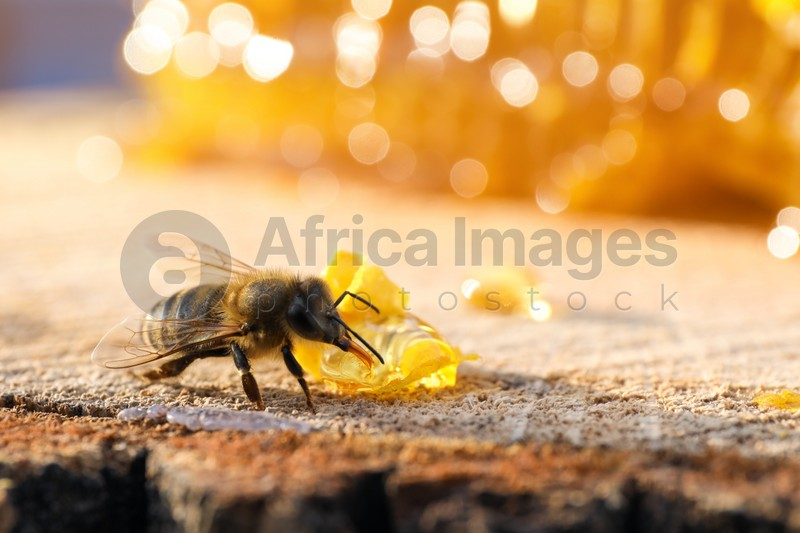 Small piece of fresh honeycomb with bee on wood stump, closeup