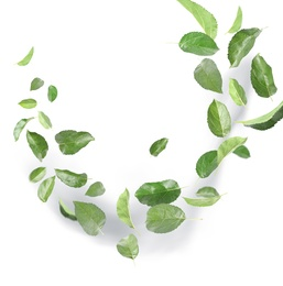 Many green leaves moving by gust wind on white background