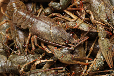 Fresh raw crayfishes as background, closeup. Healthy seafood