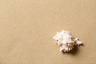 Beautiful seashell and space for text on beach sand, top view. Summer vacation