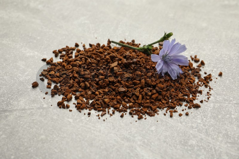 Pile of chicory granules and flower on light grey table