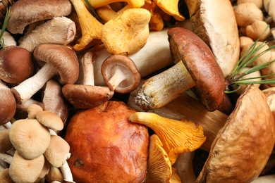 Different fresh wild mushrooms as background, top view