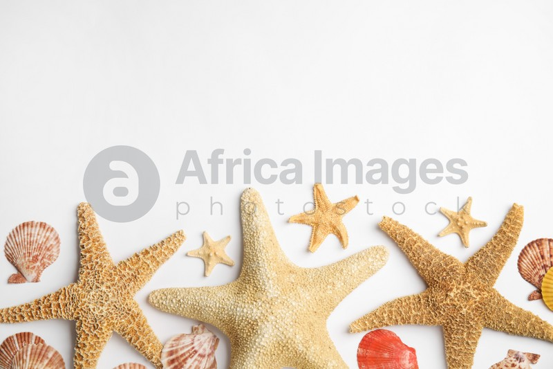 Beautiful sea stars and shells on white background, flat lay. Space for text