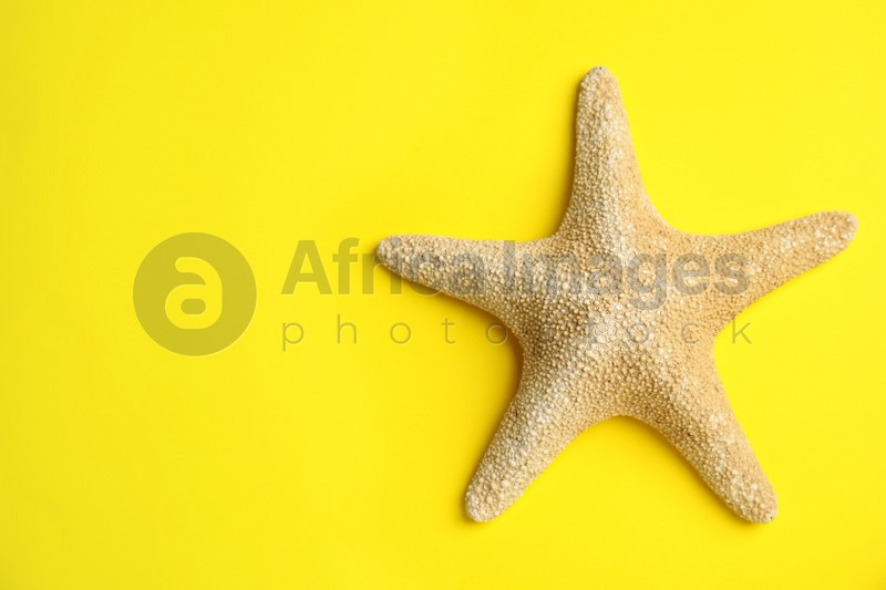 Beautiful sea star on yellow background, top view. Space for text