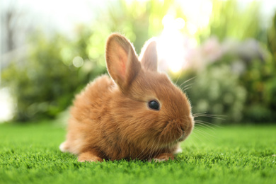 Adorable fluffy bunny on green grass against blurred background, closeup. Easter symbol