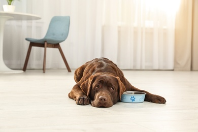 Cute friendly dog lying near feeding bowl on floor in room