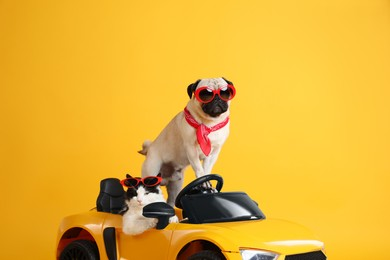 Funny pug dog and cat with sunglasses in toy car on yellow background