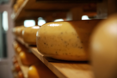 Fresh cheese heads on rack in factory warehouse, closeup