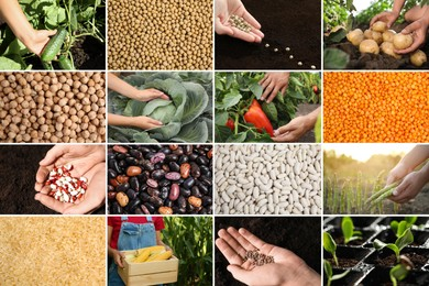 Collage with different photos of vegetables, legumes and seeds. Vegan lifestyle