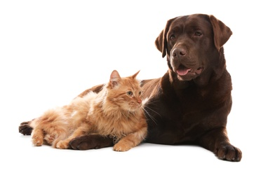 Cat and dog together isolated on white. Fluffy friends