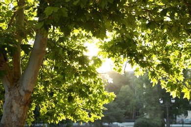 Beautiful tree with green leaves outdoors on sunny day