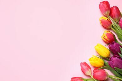 Beautiful spring tulips on pink background, flat lay. Space for text