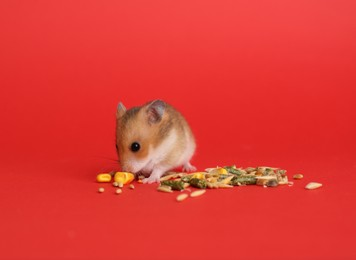 Cute little hamster eating on red background