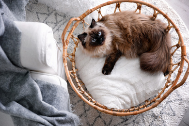 Cute Balinese cat in basket at home, top view. Fluffy pet