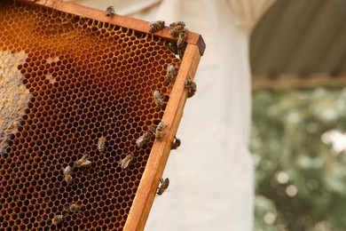 Hive frame with honey bees outdoors, space for text