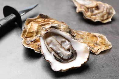 Fresh oysters and knife on grey table, closeup