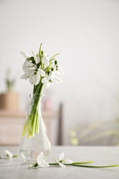 Beautiful snowdrop flowers in glass vase on light grey table, space for text