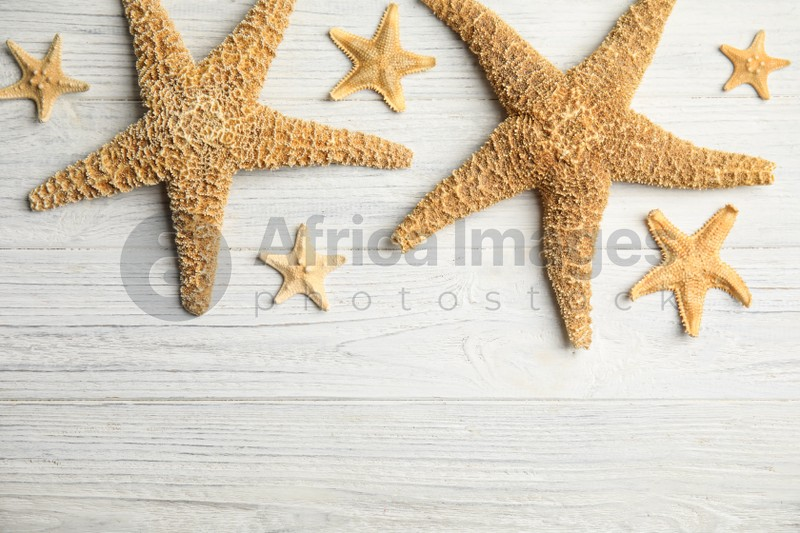 Beautiful sea stars on white wooden background, flat lay. Space for text