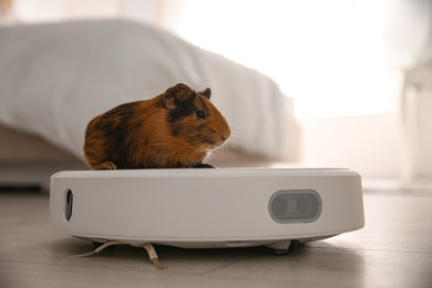 Modern robotic vacuum cleaner and guinea pig on floor at home