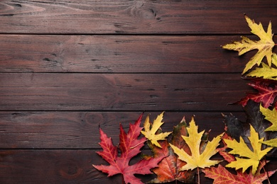 Dry autumn leaves of Japanese maple tree on brown wooden background, flat lay. Space for text