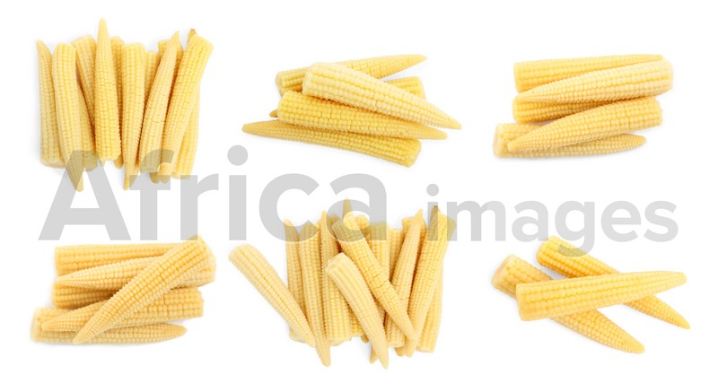 Set with tasty baby corn cobs on white background