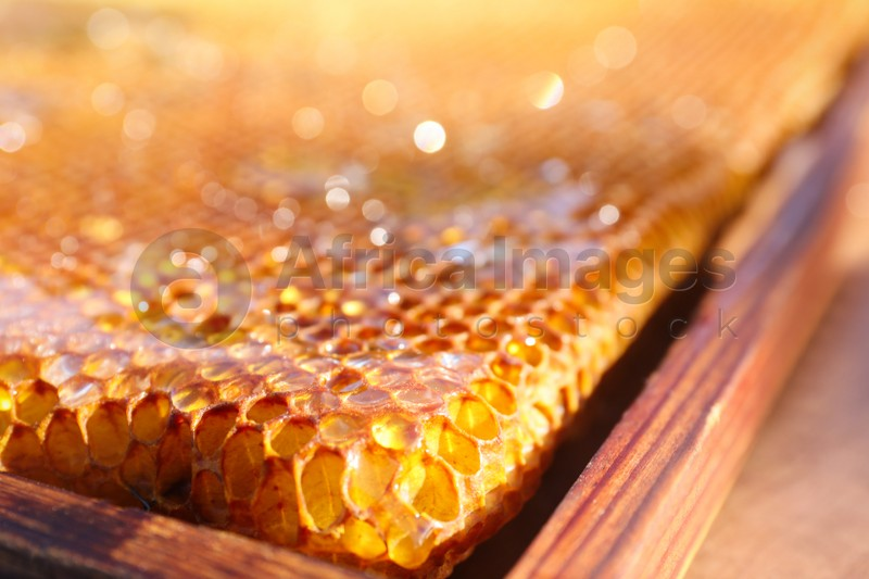 Closeup view of uncapped filled honeycomb frame