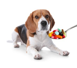 Beagle dog and spoon full of different pills on white background. Vitamins for animal