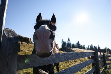 Cute horse near fence outdoors, space for text. Lovely domesticated pet