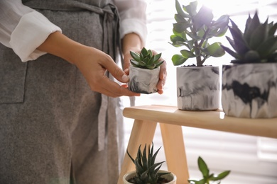 Woman with different beautiful succulents indoors, closeup