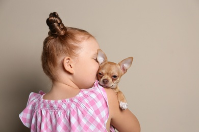 Little girl with her Chihuahua dog on grey background. Childhood pet