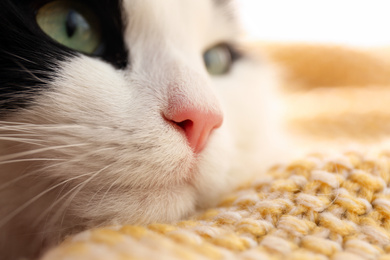 Cute cat relaxing on yellow knitted fabric, closeup. Lovely pet