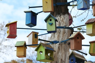 Lots of colorful wooden bird houses on tree outdoors