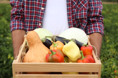 Farmer with wooden crate full of different vegetables in field, closeup. Harvesting time