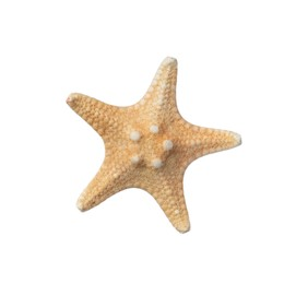 Beautiful sea star isolated on white. Beach object