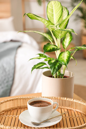 Fresh coffee and green plant in bedroom. Home decoration