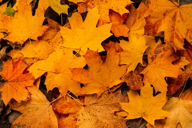 Top view of dry autumn leaves on ground as background