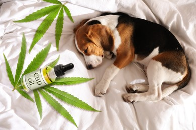Bottle of CBD oil and cute dog sleeping on bed, top view