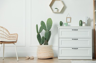Stylish room interior with beautiful potted cactus and chest of drawers